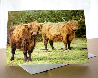 Highland Cattle Shaggy Moo Cows Photo Greetings Card (A5) Scotland Photograph