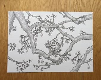 Spring Oak, A4 original drawing, oak tree, tree art, wall art, interior decor, blck and white drawing, pen and ink art,