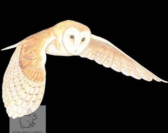 Owl Blank Card