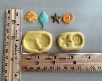 Small seashells and starfish
