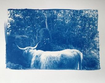 Custom Cyanotype Print from Digital File