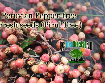 California Pepper Tree- Peruvian Pepper Tree (Schinus molle) 150 Seeds