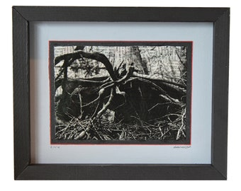 Roots (Nature Series) - Print 2