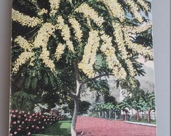 Honolulu 1920 (sent)