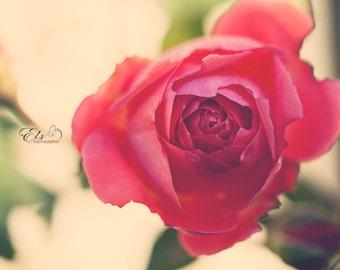 Vintage Rose #2 digital print