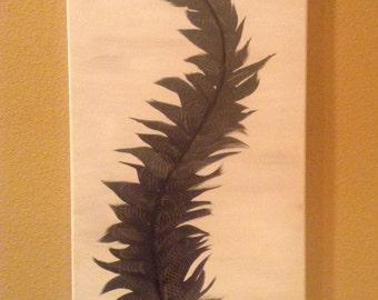 Fan Feather