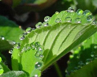 Bevogtiger, Naturalia's All Natural Moisturizer