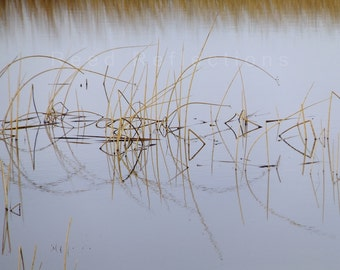 Reed Reflections #3
