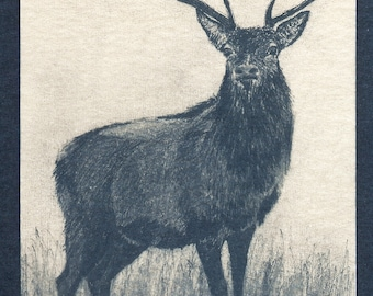 Stately Stag Toned Cyanotype