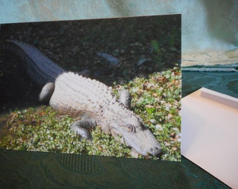 Blank Greeting Card ... Gator Fun, green, alligator, nature, fun note card ... #25