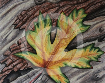 Maple Leaf-original drawing