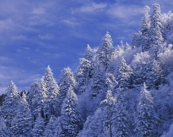 Smokey Mountain Christmas Tree - DISCOUNTED handmade soap