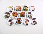 12 Mushroom Fridge Magnets, Mushroom Decor, Morel Mushroom, Fungus, Refrigerator Magnets, Pin Back Buttons, Wine Charms, Bottle Cap 1107