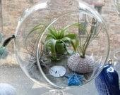 Under the sea, hanging terrarium life air plants glass starfish , natural sea urchin and sand dollar.