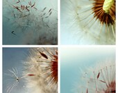 dandelion print set, 4 photo set, gallery wall art, wall art set, four prints, blue print set, dandelion print, dandelion art, blue wall art