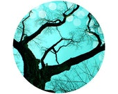 Tree Photography, Forest, Black, Aqua, Circle, Round Image - 8x8 inch Fine Art Photography Print - An Evening to Dream Circle