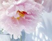 Pink Peony Art, Peony Print, Peony Photograph, Peony Wall Art,  Floral  Art Print, Shabby Chic Home, Flower Photography