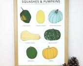 Squashes and Pumpkins print