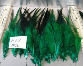 Choose your Turquoise Hackle Feathers for Earrings Hair Pieces Crafts 25 pcs. F 10
