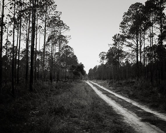 Dirt Road Photography, Travel Decor, Florida Photography, Black and White Print, Long Pine Forest Photo, Everglades Nature Photography