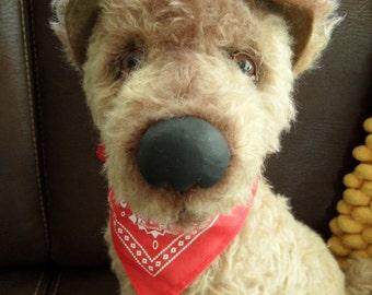 Harold, un Airedale / mix Labrador... à la recherche d'un chat libre la maison!