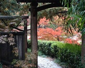 Autumn Photography, Fall Decor, Nature Art, Oriental Garden, Maple Tree, Fall Foliage, Bamboo, Fall Colors, Walkway, Path - The Garden Path