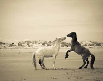 Wild horse photograph . black and white photography . Cumberland Island . equine print . travel photograph . beach art . vintage style art