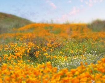 Digital backdrop California Poppy and wild flower field