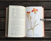antique field book of western wildflowers