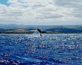 Humpback Whale Photo Greeting Card - Fine Art Photography - Kona Coast, Hawaii, Big Island - Ocean Nature Photography by Sue Kohler