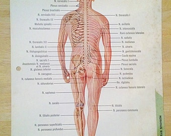 1960s Medical Nervous System