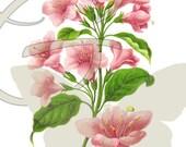 Flower Illustration Vintage Decor Digital Printable Clip Art Image Download Botanical Graphic