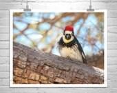 Bird Picture, Woodpecker Bird, Nature Art Photography, Wildlife Art, Woodpecker Picture, Bird Art Prints, Birder Gift, Madera Canyon