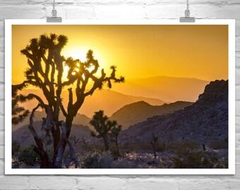 Joshua Tree, Sunset Art, Cactus Picture, Desert Photographs, Southern California, Living Room Art, Mojave Desert, Western Landscape