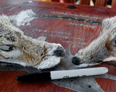 Pair of shaped fox and coyote faces for crafts, taxidermy practice, display, more DESTASH