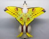 Custom Trade Comet Moth