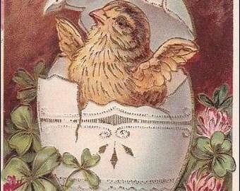 Easter postcard, vintage postcard, antique postcard Chick Hatching from Egg, Bee Vintage PostCard - Post Card, Easter ephemera