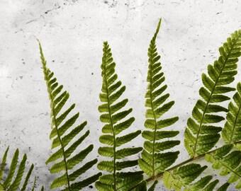 Botanical Photography Fern Print Green Wall Art Nature