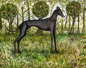 Dog Art Print -Italian Greyhound