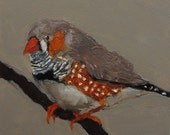 ZEBRA FINCH BIRD Colette W. Davis 4x4 Art Giclee print