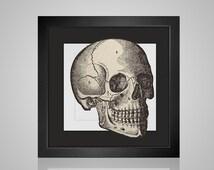 Anatomical Skull - medical creepy scary bones halloween modern needlecraft  pdf cross stitch pattern - INSTANT DOWNLOAD