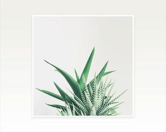 Succulent Art Print, Minimal Botanical Art, Gift for Gardener, Kitchen and Bathroom Wall Art - Overlap