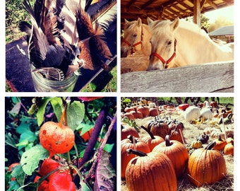 Photo Print Set 4 Square Maine Fall Autumn Fair Livestock Farming Fine Art Photos