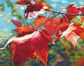 Autumn leaves art watercolor painting print by Cathy Hillegas, 16x22, maple leaves, red leaves, watercolor print, red, green, blue, orange