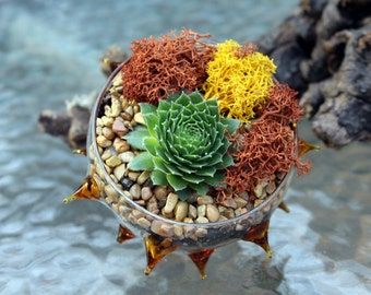Spiny copper succulent planter-Hens and chicks-Unique re-positionable planter-Hand blown glass-Reindeer moss