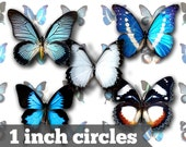 Butterflies - 1 Inch Circles - Digital Collage Sheet - Jewelry Supply, Cabochon, Bottle Caps, Magnets - INSTANT DOWNLOAD