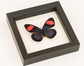 Framed Butterfly Art Painted Beauty Insect Collection