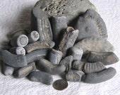 26 Fossil Fragments Art Mosaic Craft Supplies (1712)