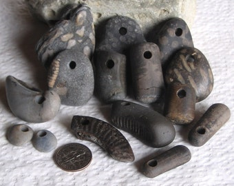 15 Natural Surf Tumbled Fossils Top Drilled 4mm holes Supplies (1714)