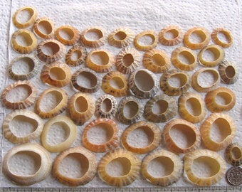 45 Sea Shells Natural Holes Large Hole Jewelry Art Mosaic Craft Supplies (1724)